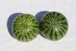 Melonen_1