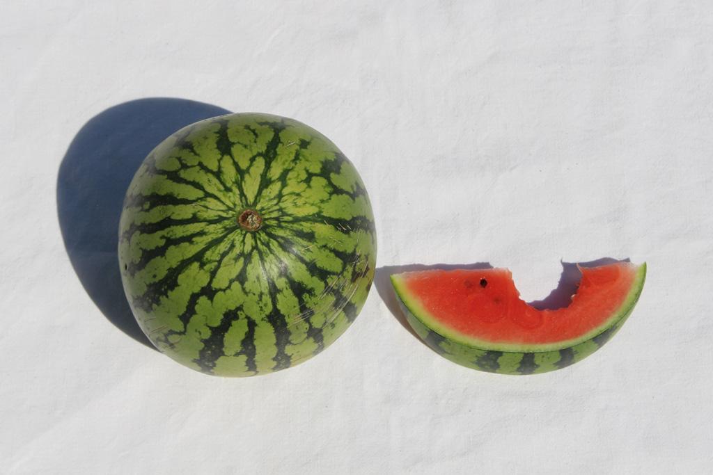 Melonen_4